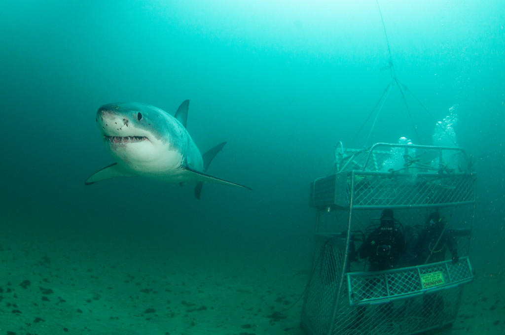 Shark Week Is Back This August // TechNuovo.com
