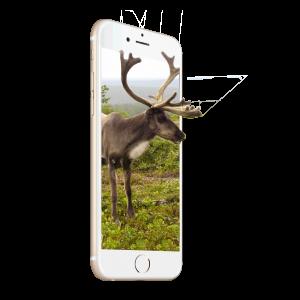 3DU_Deer